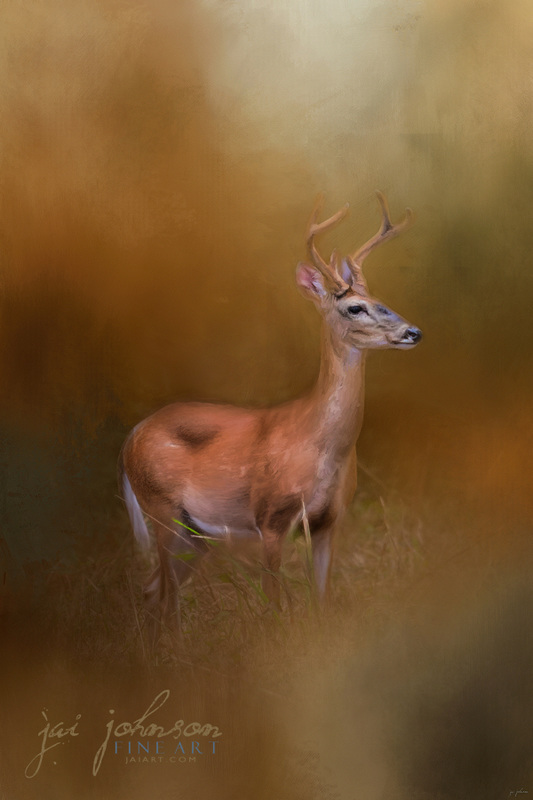Buck In The Woods - Whitetail Deer Art