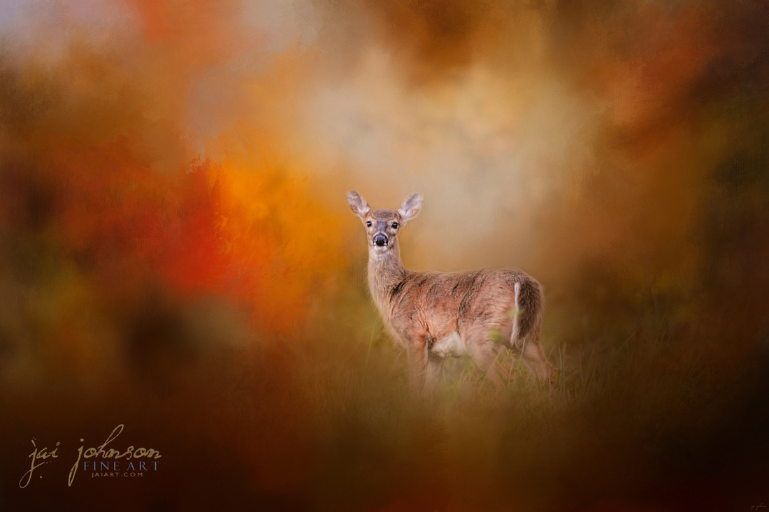 Illuminated by the Autumn Light - Deer art
