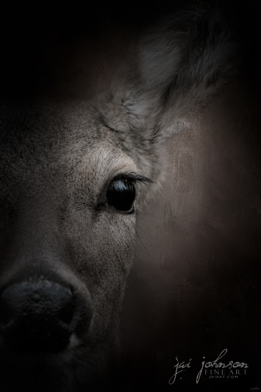 Watching - White Tailed Doe