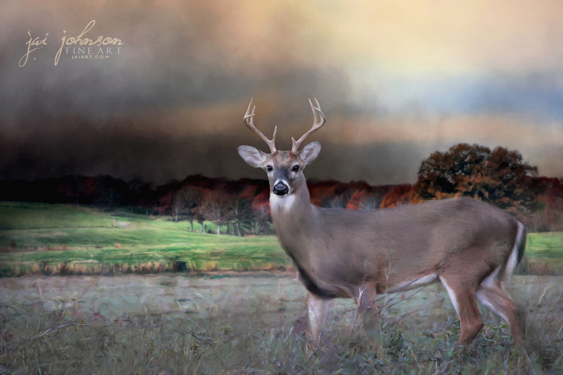 Guardian Of The West Field - White Tail Deer Art