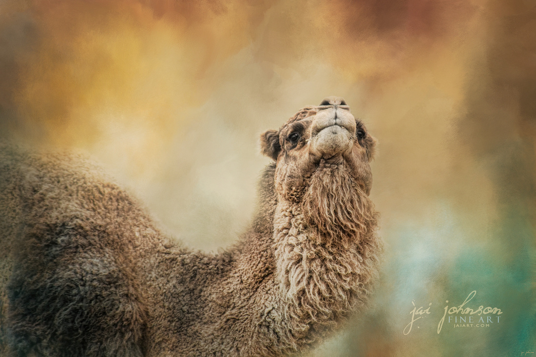 The Scent of Fall - Camel Art