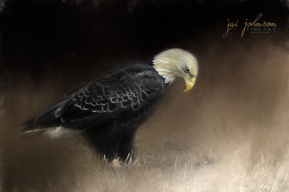 Watching The Snow Melt - Bald Eagle Art