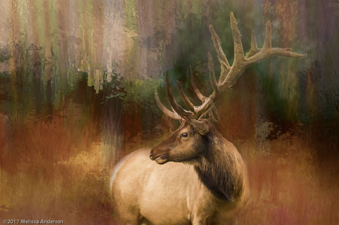 Elk photo transformed into art using textures