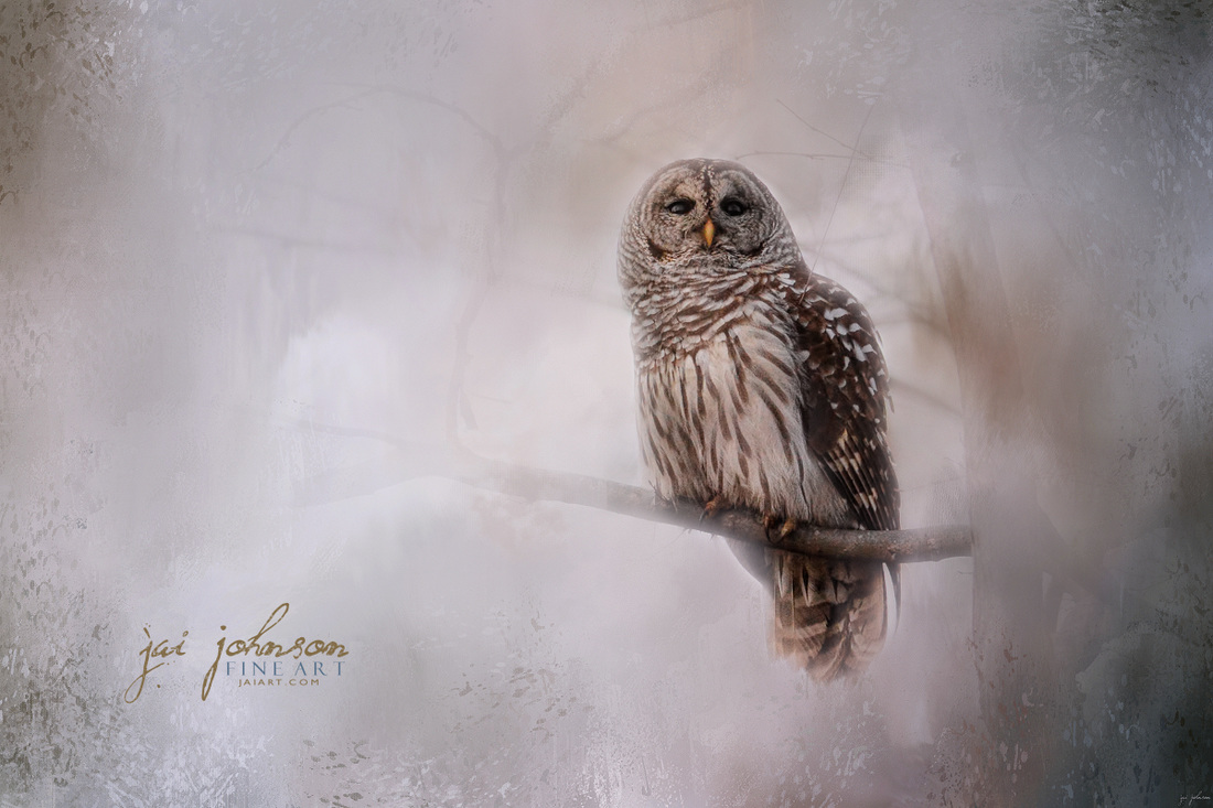 Winter Owl Art