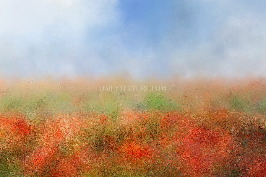 Poppy Field Texture/Background