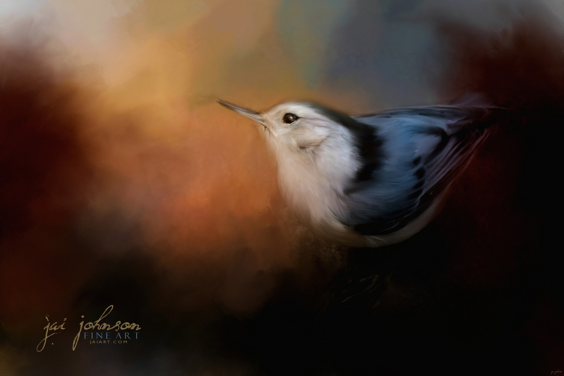 Nuthatch In Autumn - Song bird art