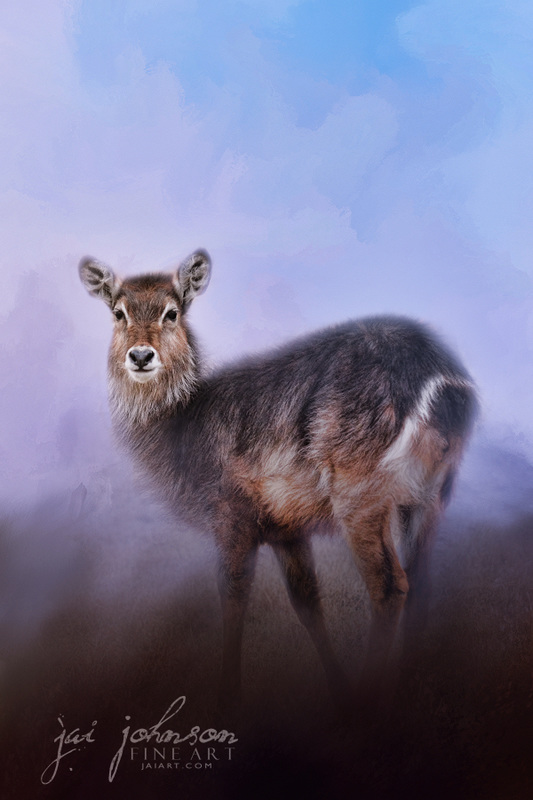 Waterbuck In Winter