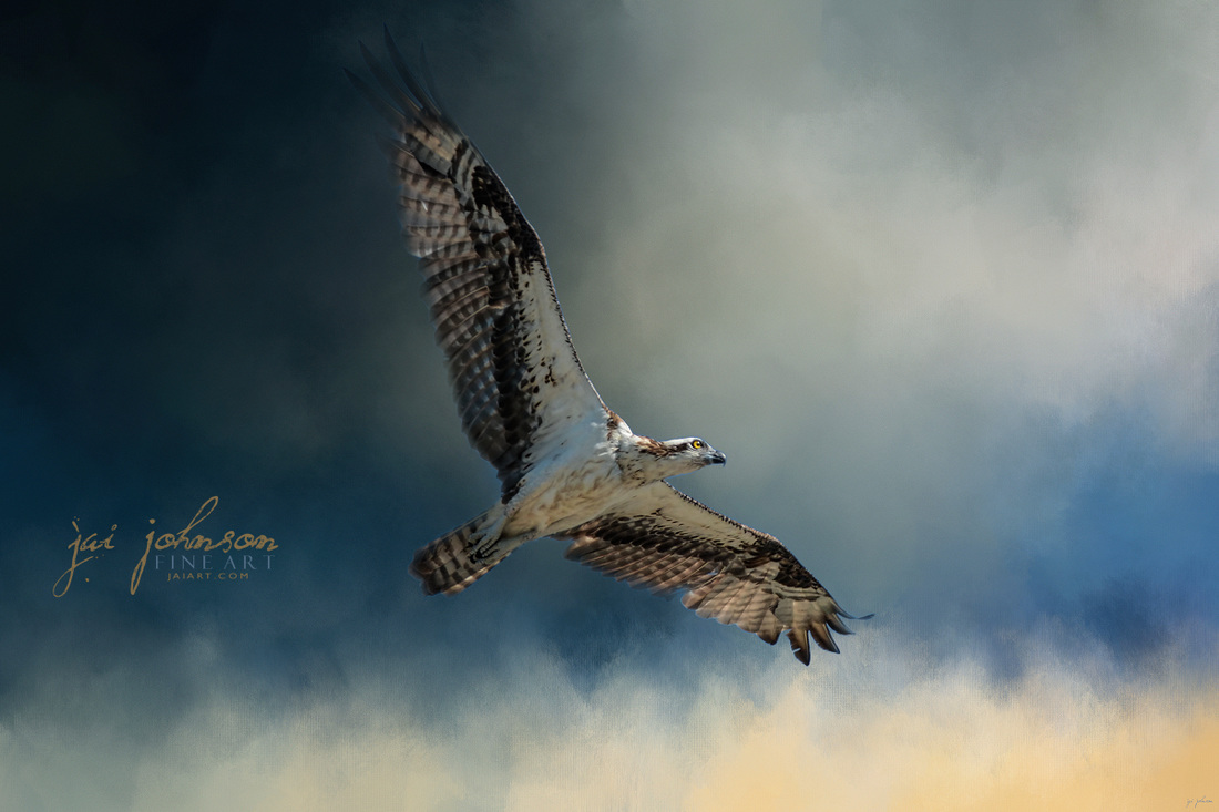 Winter Osprey Wildlife Art