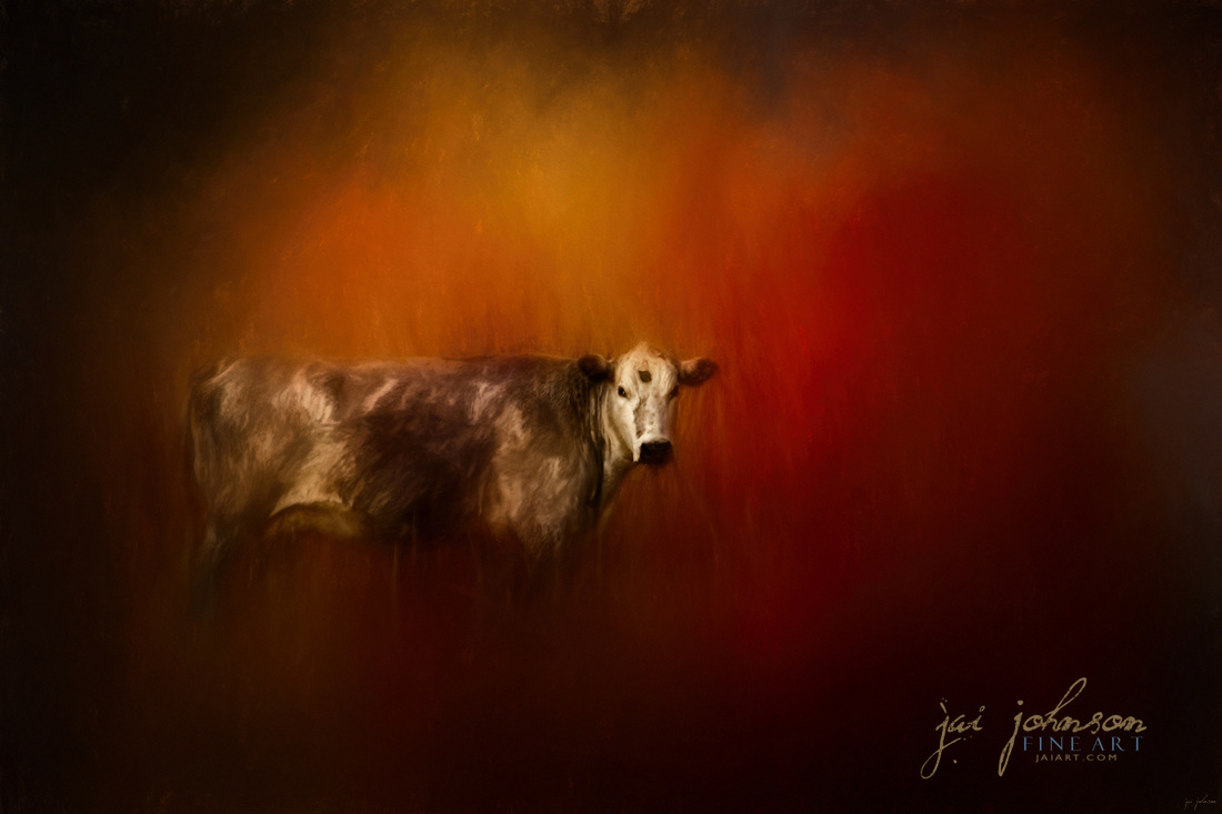 A Cow In Autumn