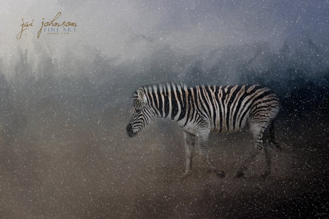 Zebra In A Snow Storm