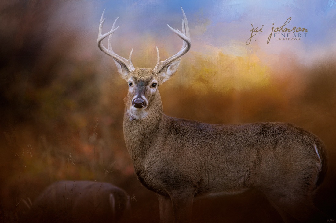 Let The Season Begin - White Tailed Deer Art