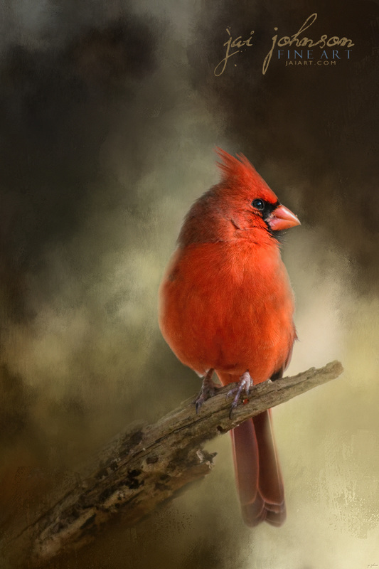 In The January Sun - Northern Cardinal Art