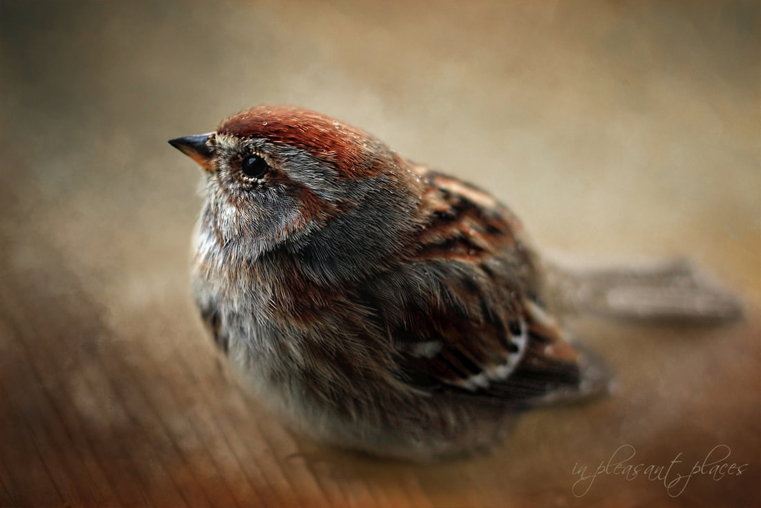 Bird art using the Daily Textures by Joanna Kovalcsik