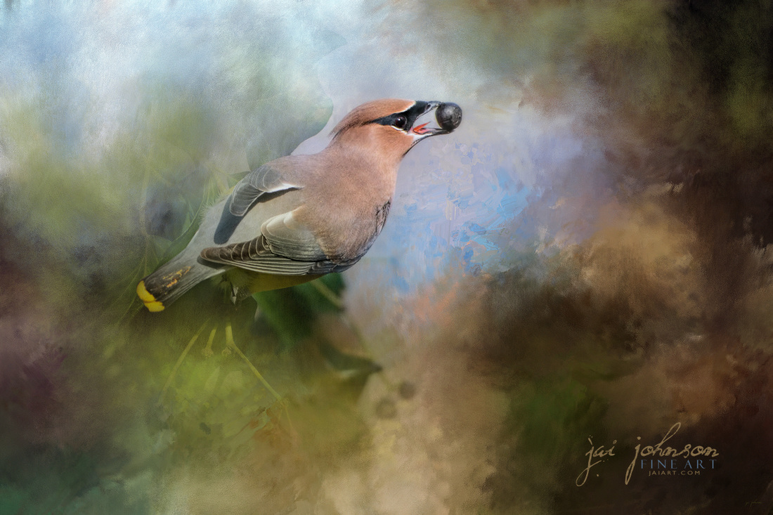 Cedar Waxwing bird art