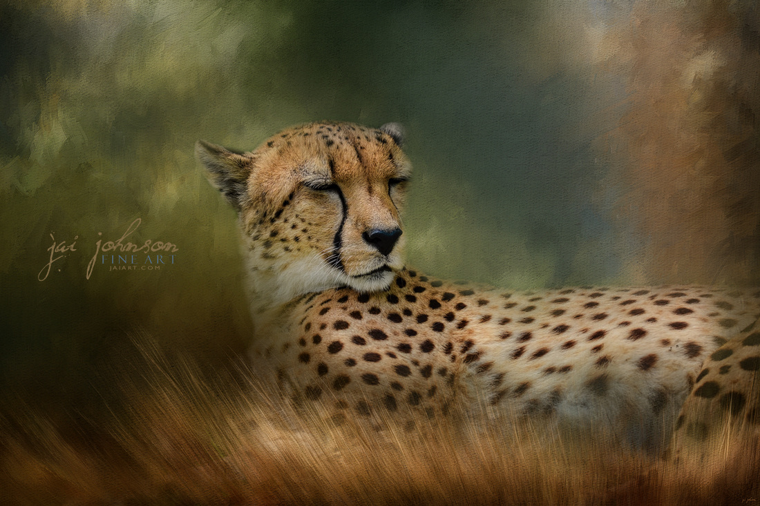 Napping In The Brush - cheetah art