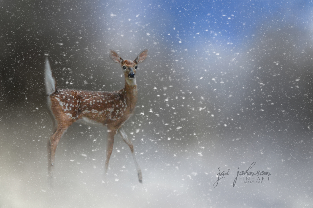 Step Out In Faith - Baby Deer Art